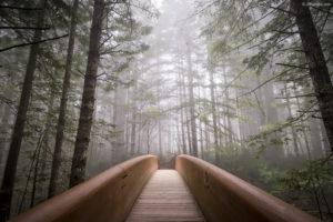 Forest Bridge White Gamut Wallpaper