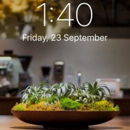 iPhone 7 Wide Gamut wallpaper.