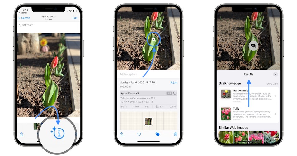 how to visual look up on iphone